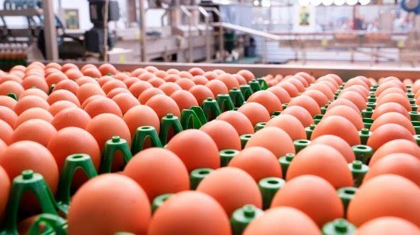 Preço dos ovos em janeiro foi o melhor para o mês desde 2013
